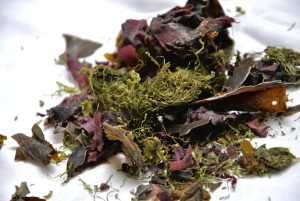 seaweed-1489512_1280